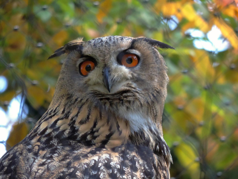 Schau mich nicht so an!!!