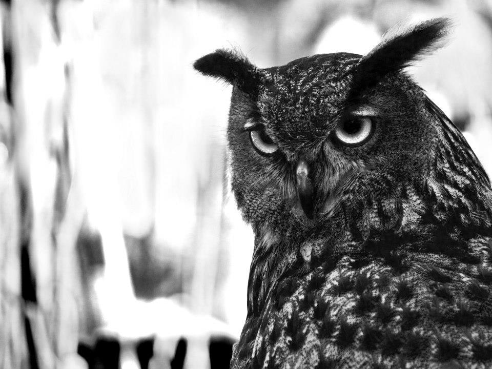 Schau mich nicht so böse an...