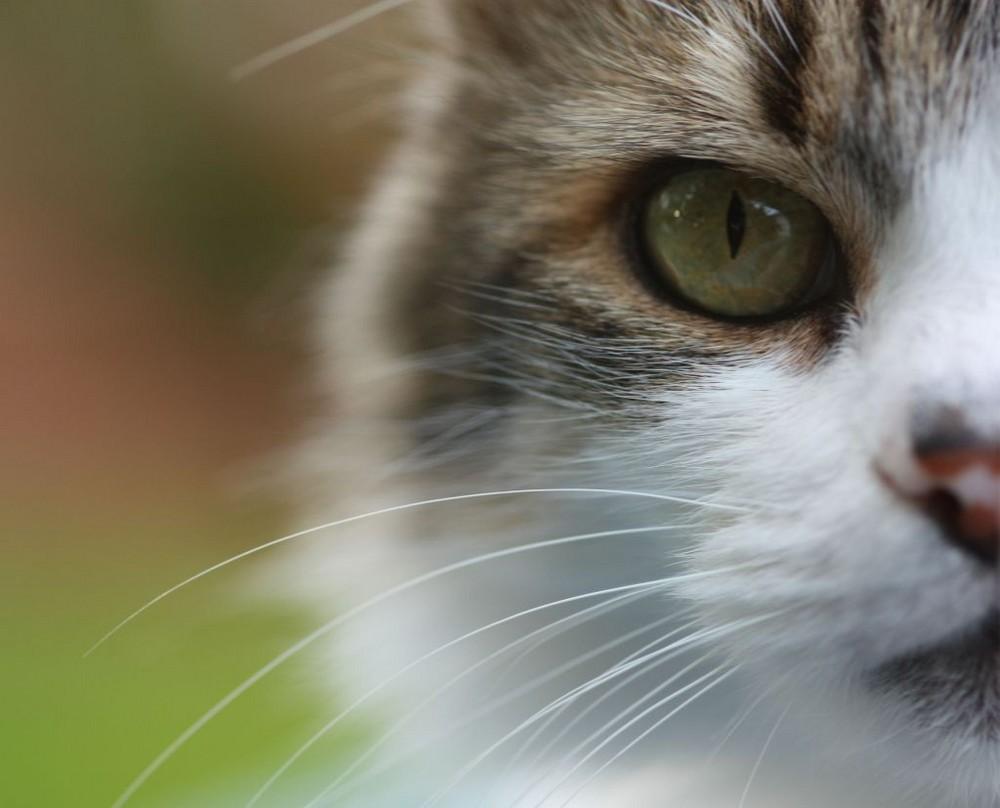 Schau mir in das Auge, Kleine!