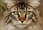 Schau mir in die Augen 2