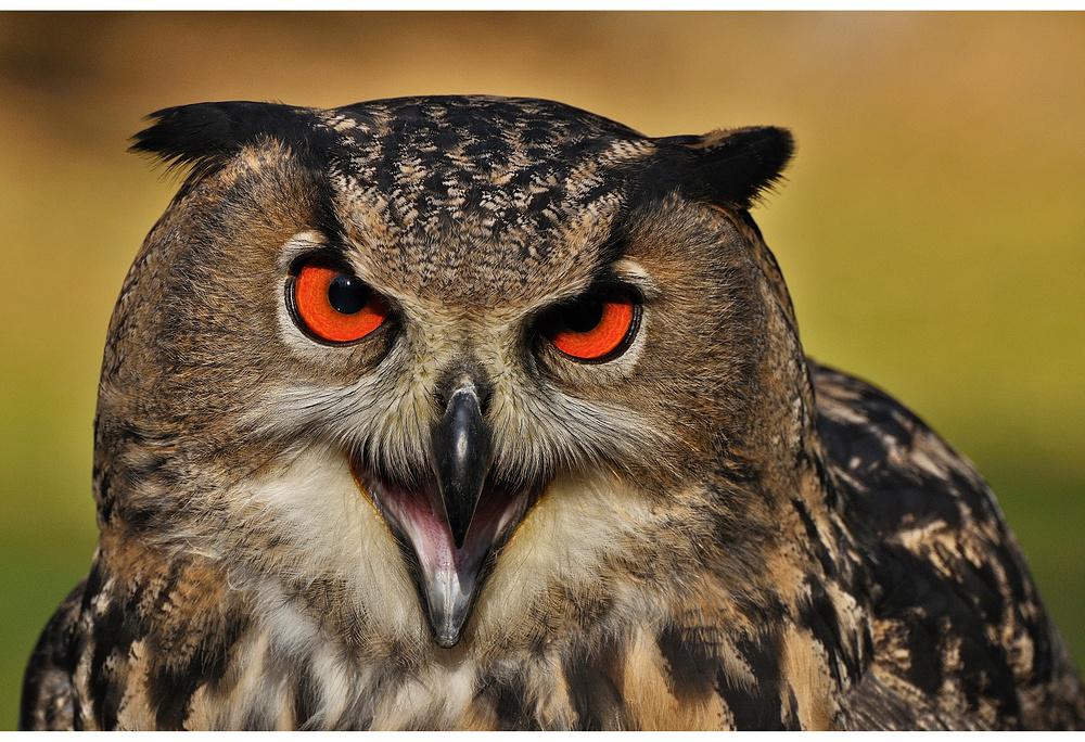 Schau mir in die Augen......