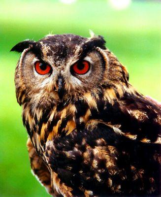 - - Schau mir in die Augen - -