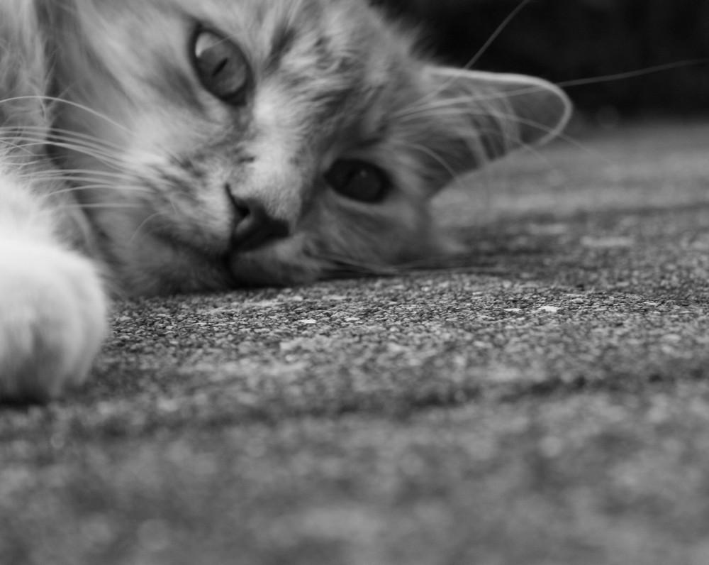 Schau mir in die Augen..