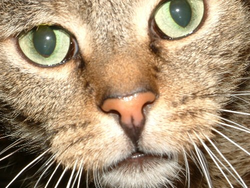 Schau mir in die Augen!