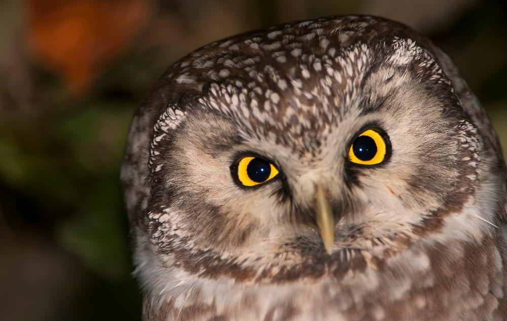 Schau mir in die Augen.......