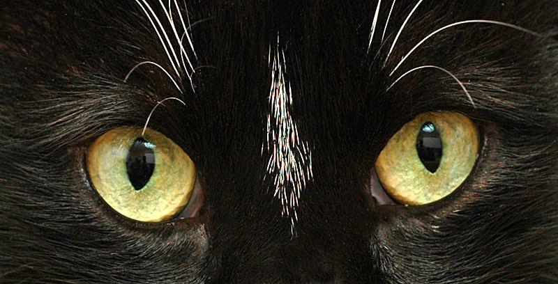 Schau mir in die Augen ......
