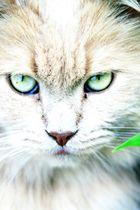 Schau mir in die Augen