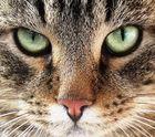 Schau mir in die Augen....