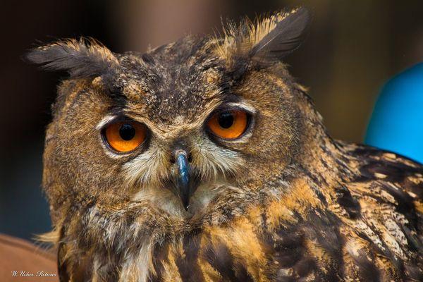 Schau Mir in die Augen kleiner. Naturpark Gangelt Bild 2