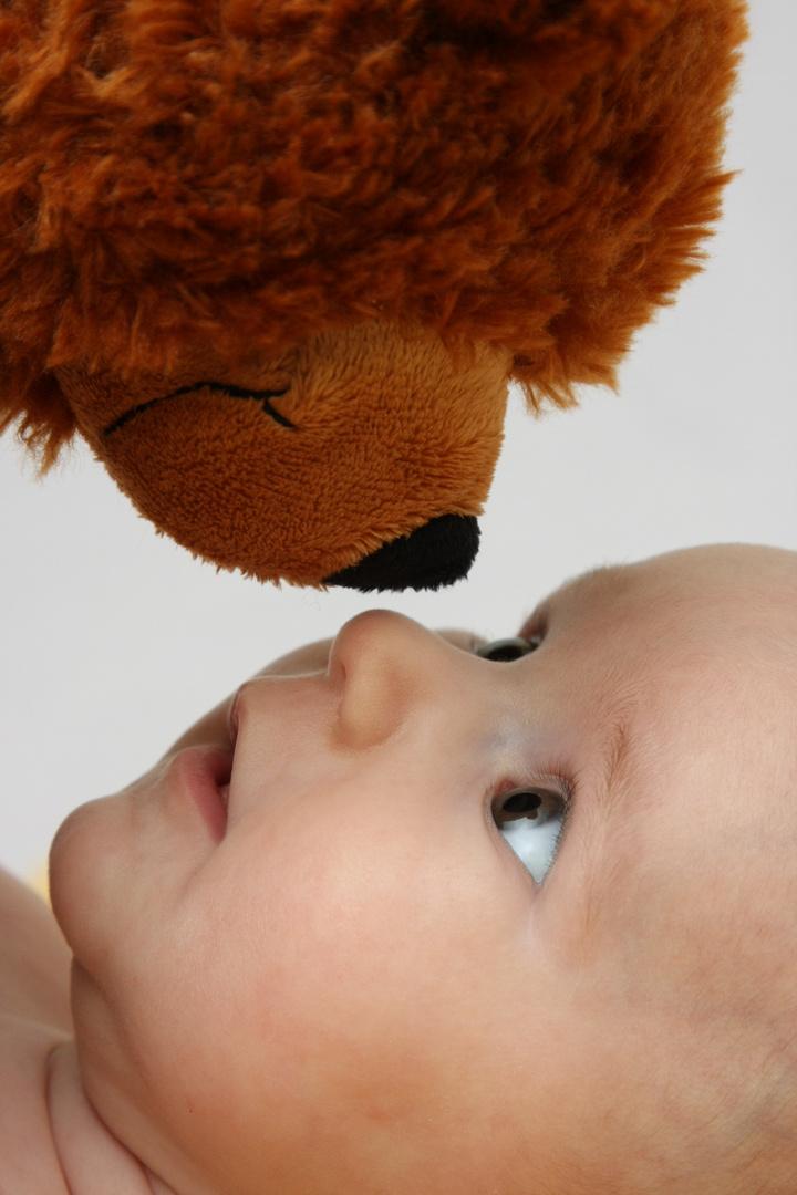 schau mir in die Augen Teddy
