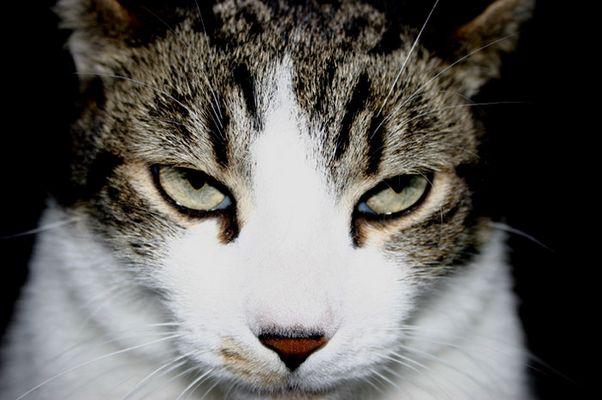 Schau mir in die Augen Tiger ...