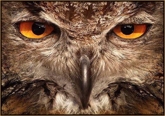Schau mir ins Auge!