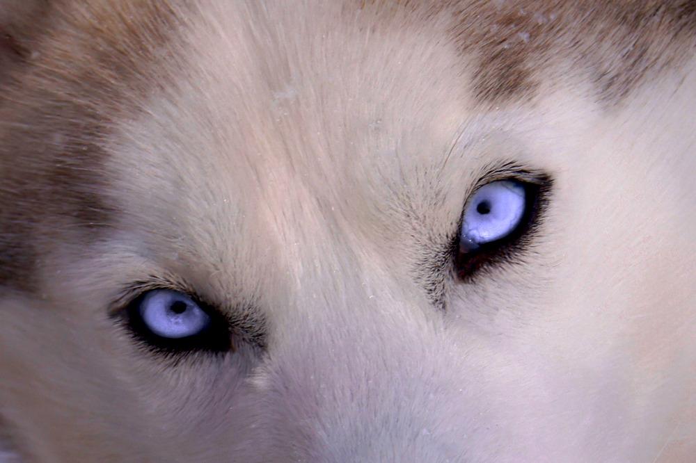 schau mir noch einmal in die Augen....