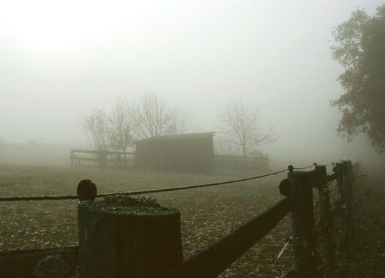 Schaurig, schöner Nebel