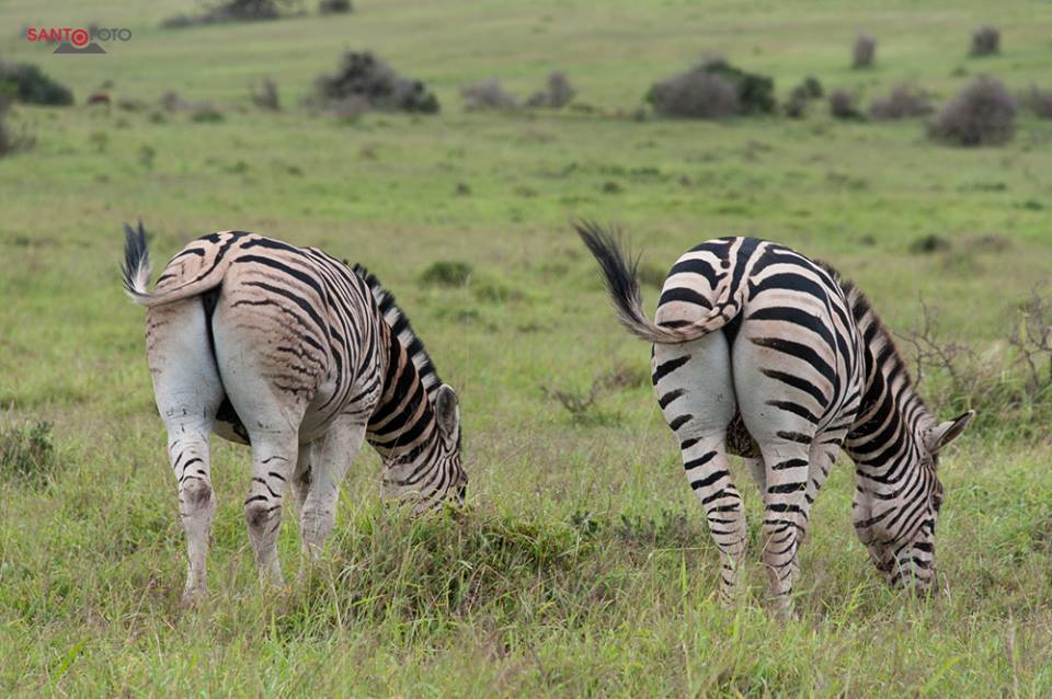 Schcotia Park Südafrika