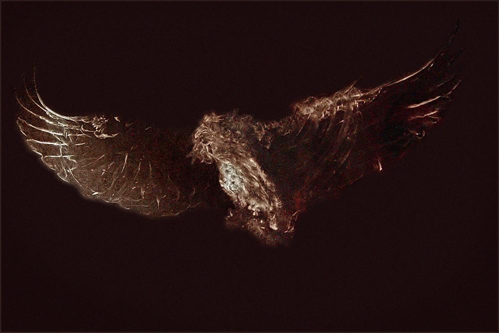 Scheibenvogel