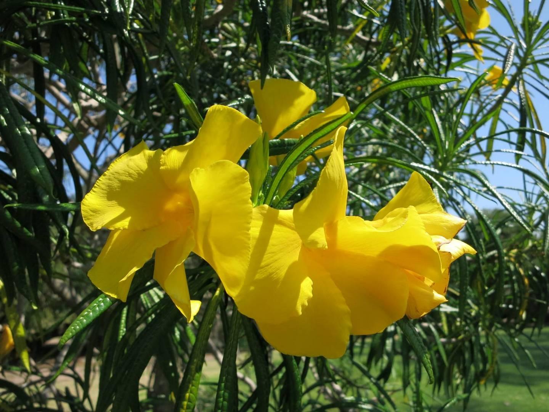 Schellenbaum in San Diego