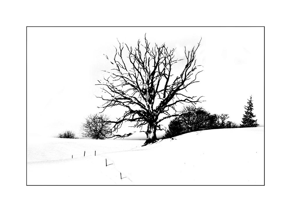 scherenschnitt foto bild jahreszeiten winter im alpenvorland bilder auf fotocommunity. Black Bedroom Furniture Sets. Home Design Ideas