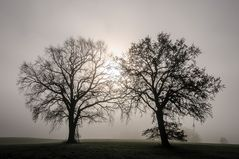 Scherenschnittbäume