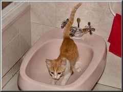 Scherzare qui sì...ma bagno no!