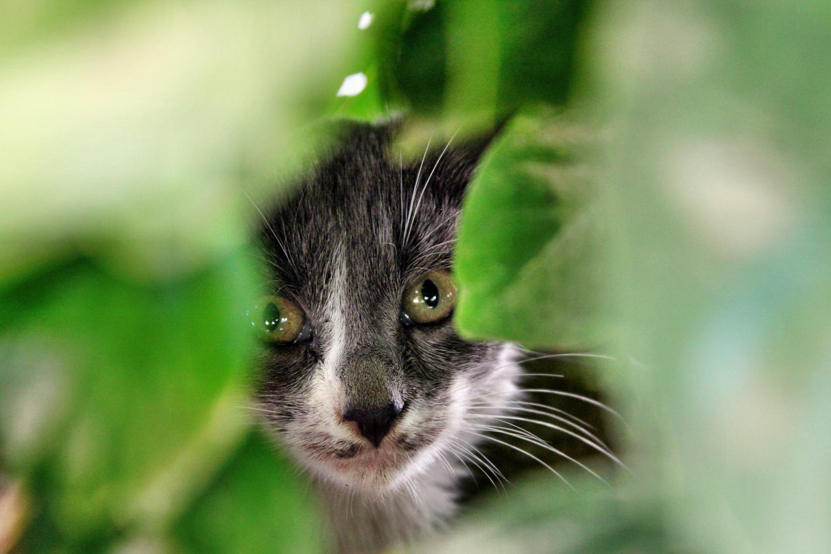 scheues Kätzchen
