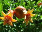 schicke Blüte