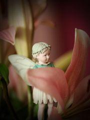 schicke euch (ein engelchen..) kleine blumenelfe gänseblümchen