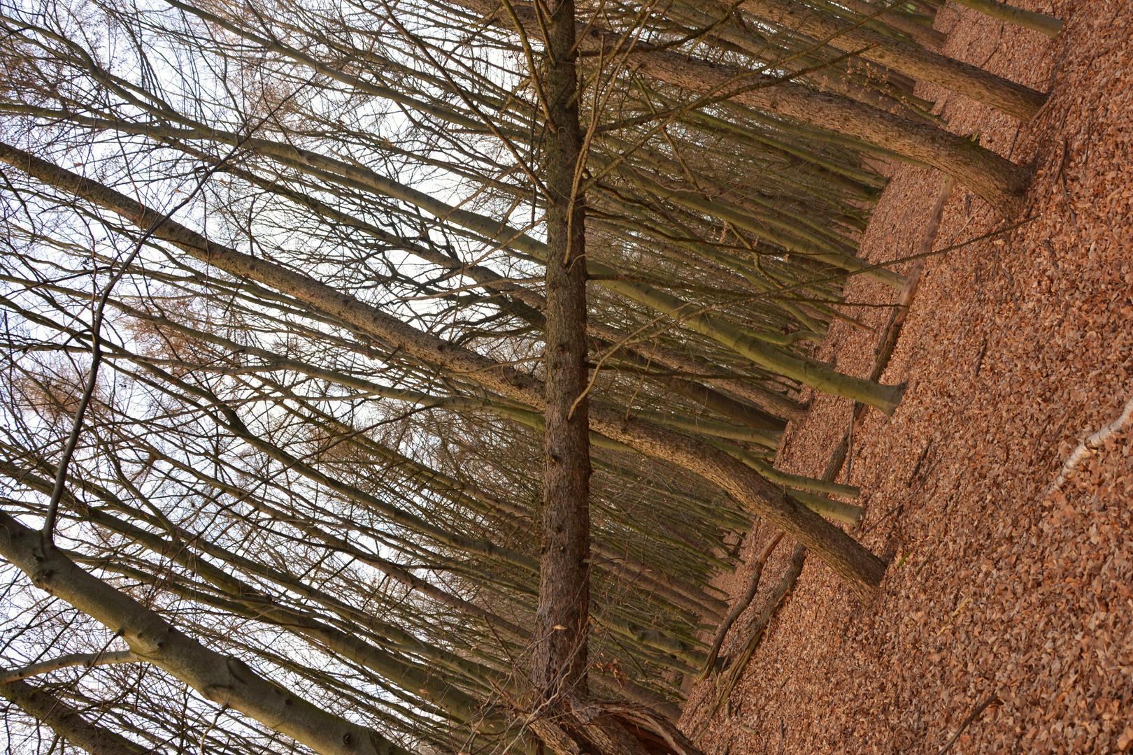 Schiefer Baum?