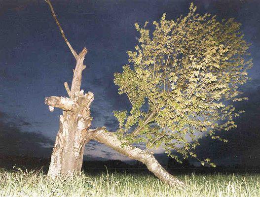 Schiefer Baum von Katzenrüti