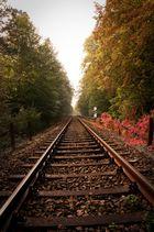 Schienen im Wald