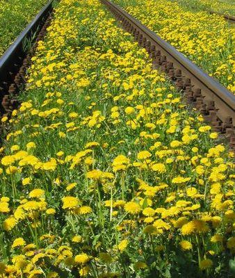 Schienen in den Frühling