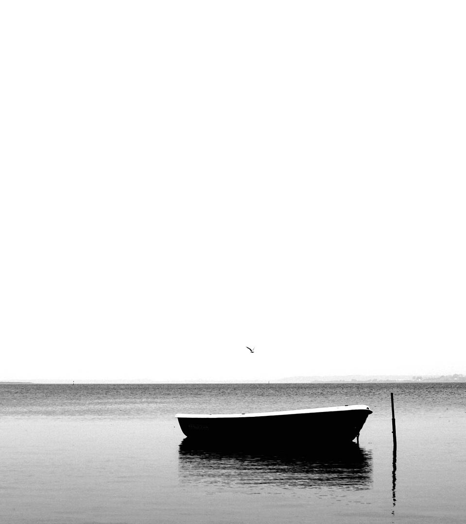 Schiff und Vogel