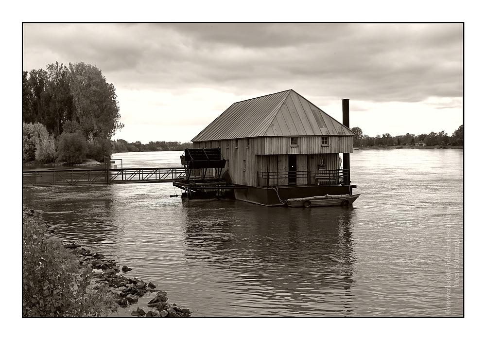 Schiffsmühle in Ginsheim - Rhein 1