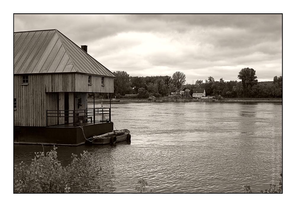 Schiffsmühle in Ginsheim - Rhein 2