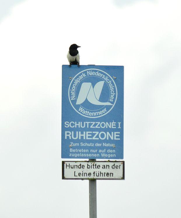 """Schildbürger"""