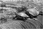 Schildkaröten