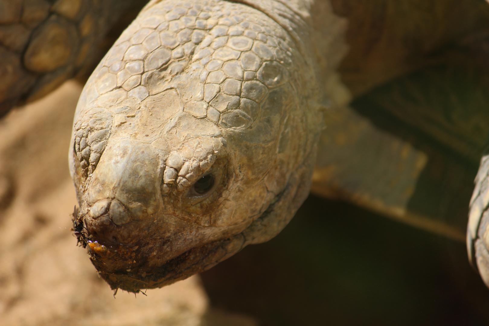 Schildkröte beim Sonnenbad