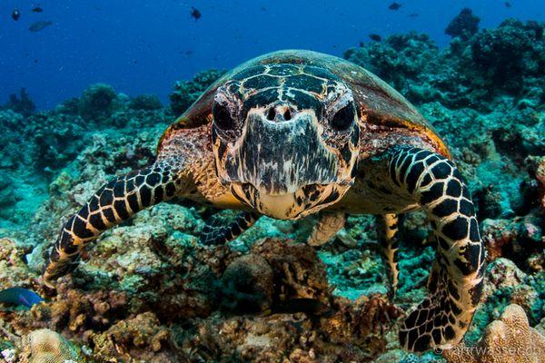 Schildkröte ganz nah :-)