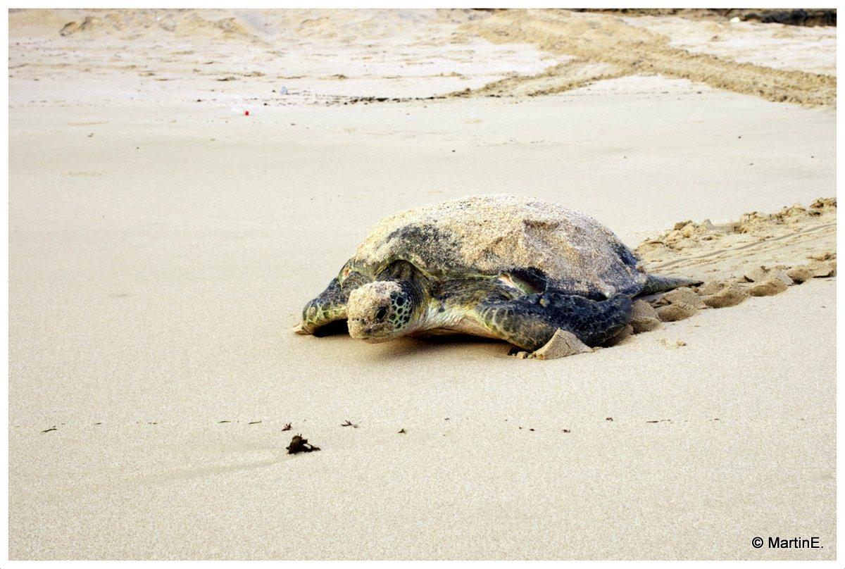 Schildkröte - geschafft