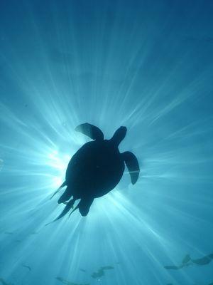Schildkröte im Flug