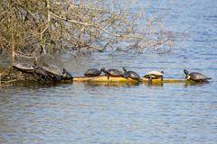 Schildkröten am Bruchsee bei Heppenheim (II)