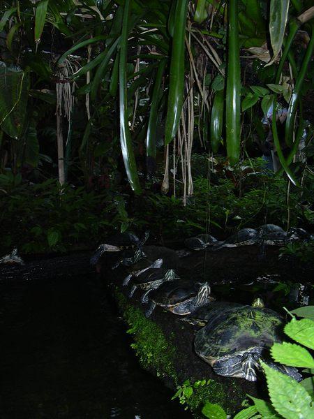 Schildkröten auf Wanderschaft