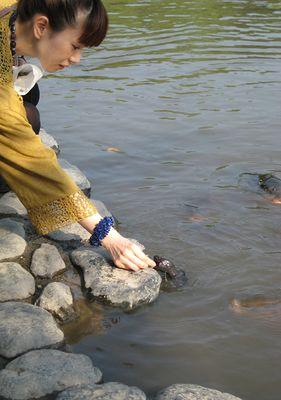 Schildkröten-Fütterung
