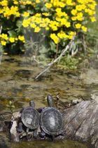 Schildkrötenkino