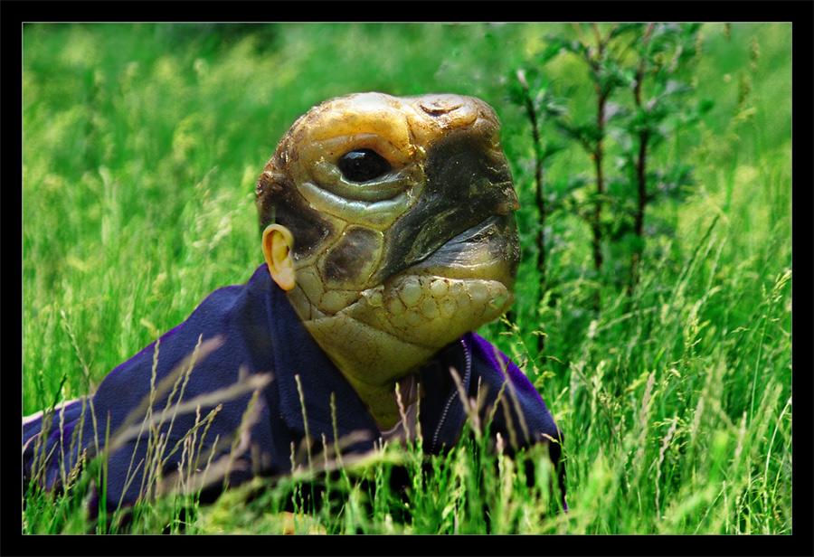 Schildkrötenmännchen