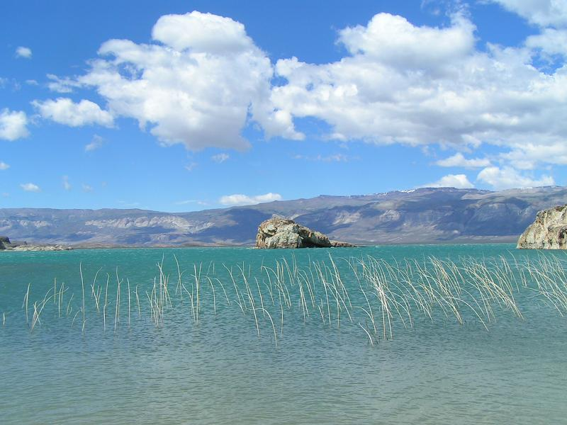 Schilf im Lago Posadas
