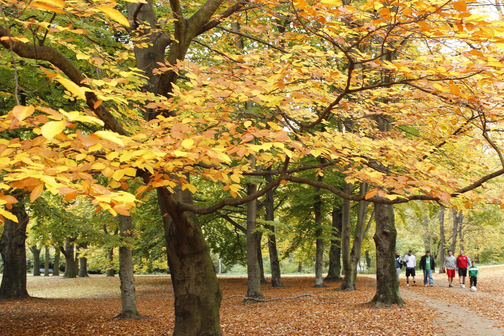 Schillerpark im Herbst 1