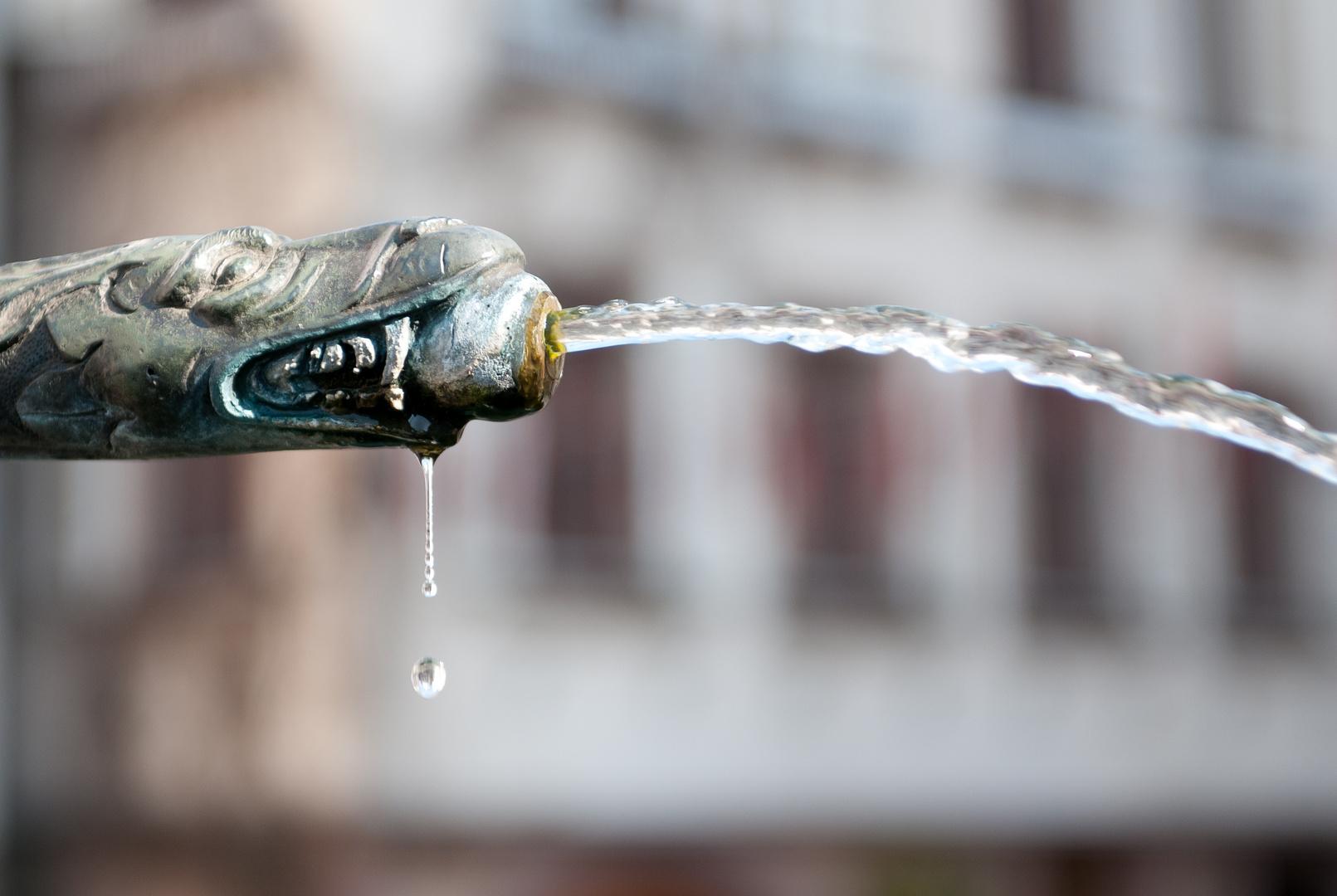Schiltacher Wasserspucker