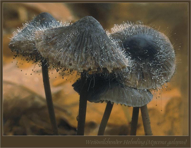 schimmel pilz foto bild pflanzen pilze flechten pilze flechten pilze bilder auf. Black Bedroom Furniture Sets. Home Design Ideas