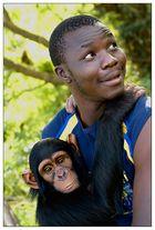 Schimpansen im Jane Goodall Institut ...